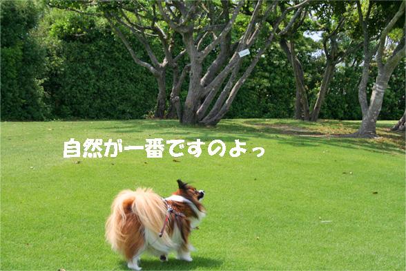 yuzu090526-2.jpg
