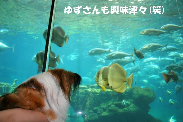 yuzu090528-1.jpg
