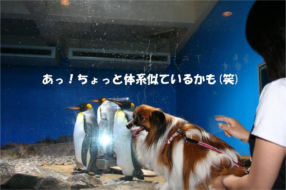 yuzu090528-2.jpg