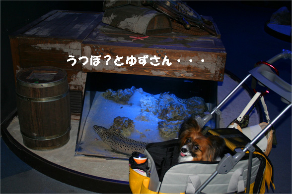 yuzu090528-3.jpg