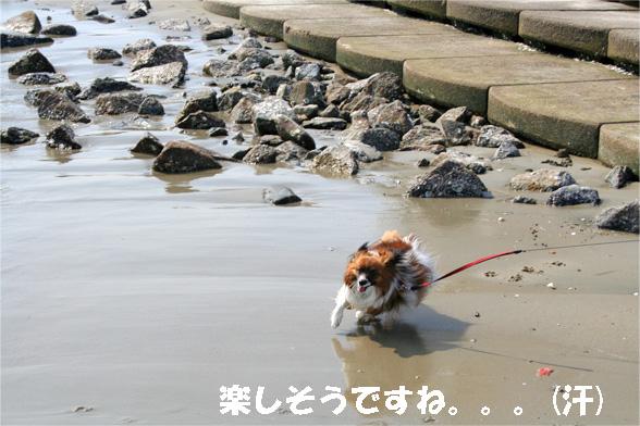 yuzu090529-4.jpg