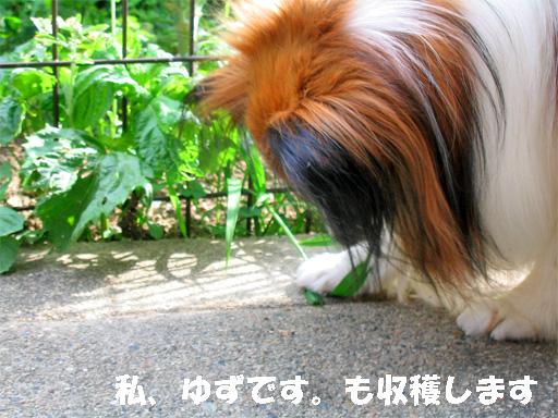 yuzu090601-1.jpg