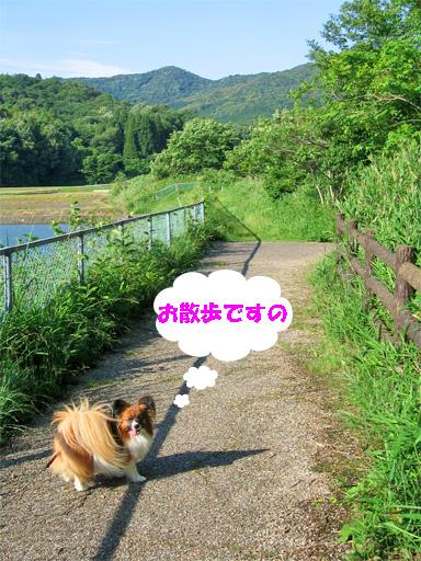 yuzu090601-2.jpg