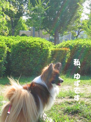 yuzu090603-1.jpg