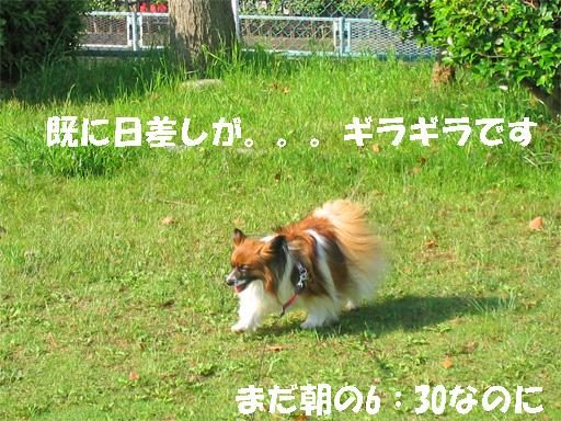 yuzu090603-2.jpg
