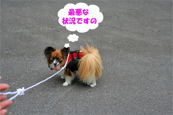 yuzu090608-1.jpg