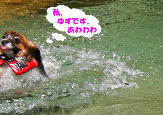 yuzu090612-1.jpg
