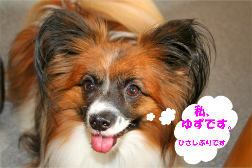 yuzu090902-1.jpg