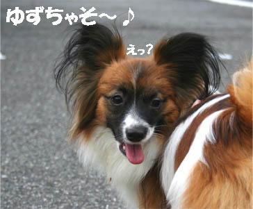 yuzu70309-1.jpg