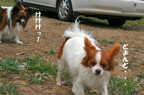 yuzuami090503-2.jpg