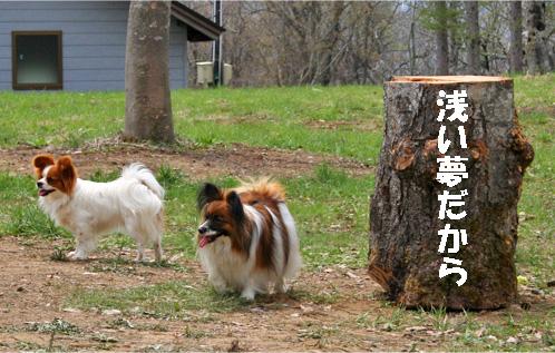 yuzuami090522-1.jpg