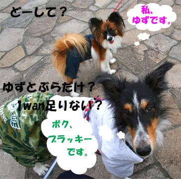 yuzubura061119-1.jpg