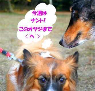 yuzubura061127-1.jpg