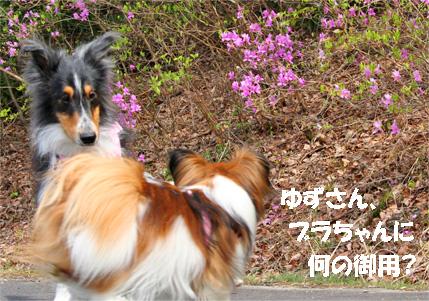 yuzubura070420-1.jpg