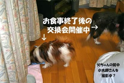 yuzubura070429-1.jpg