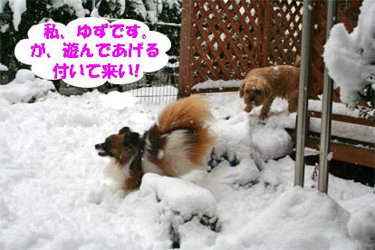 yuzugaji080212-1.jpg