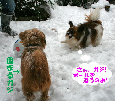yuzugaji080213-1.jpg