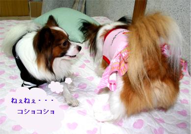 yuzukota060925-1.jpg