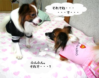 yuzukota060925-2.jpg