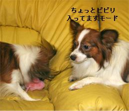 yuzukota060926-2.jpg