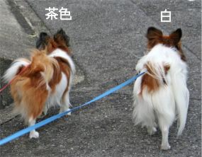 yuzukota060926-4.jpg