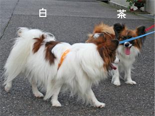 yuzukota060926-5.jpg