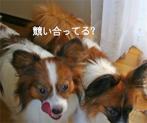 yuzukota060929-1.jpg