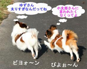 yuzukota061003-1.jpg