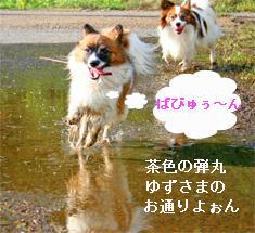 yuzukota061003-2.jpg