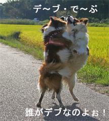 yuzukota061003-3.jpg