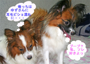 yuzukota061003-4.jpg
