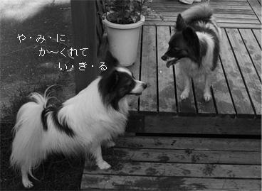 yuzukota061004-1.jpg