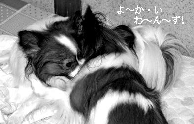 yuzukota061004-3.jpg
