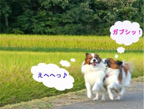 yuzukota061007-1.jpg