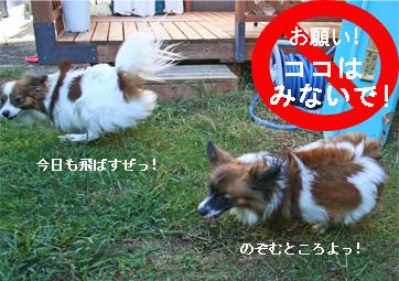 yuzukota061012-1.jpg