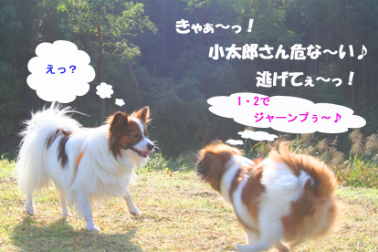 yuzukota061015-1.jpg