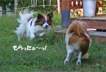 yuzukota061016-1.jpg