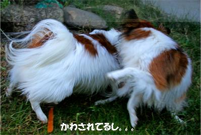 yuzukota061016-2.jpg