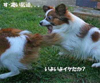yuzukota061016-3.jpg