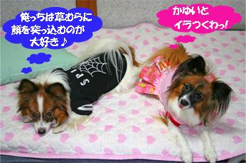 yuzukota061018-1.jpg