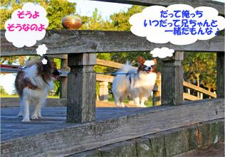 yuzukota061019-1.jpg