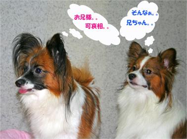 yuzukota061019-2.jpg