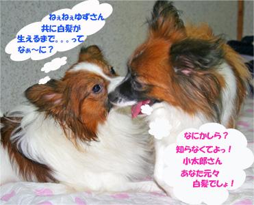 yuzukota061019-3.jpg