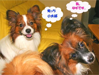 yuzukota061020-1.jpg