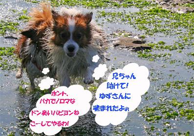 yuzukota061022-10.jpg