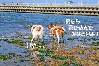 yuzukota061022-6.jpg
