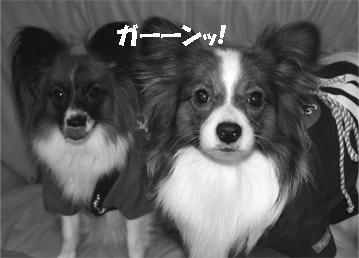 yuzukota061025-2.jpg