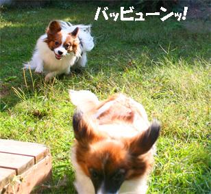 yuzukota061027-1.jpg