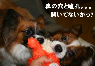 yuzukota061102-3.jpg