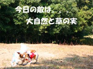 yuzukota061105-1.jpg